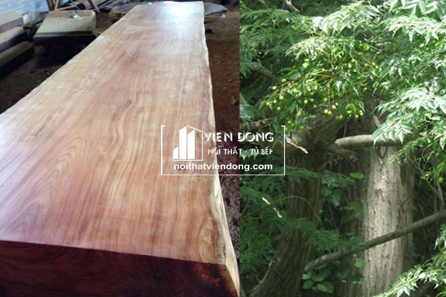 gỗ xoan đào là gì